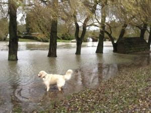 Rio in the floods